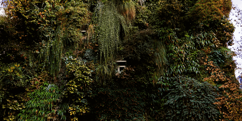 Des maisons en fleurs